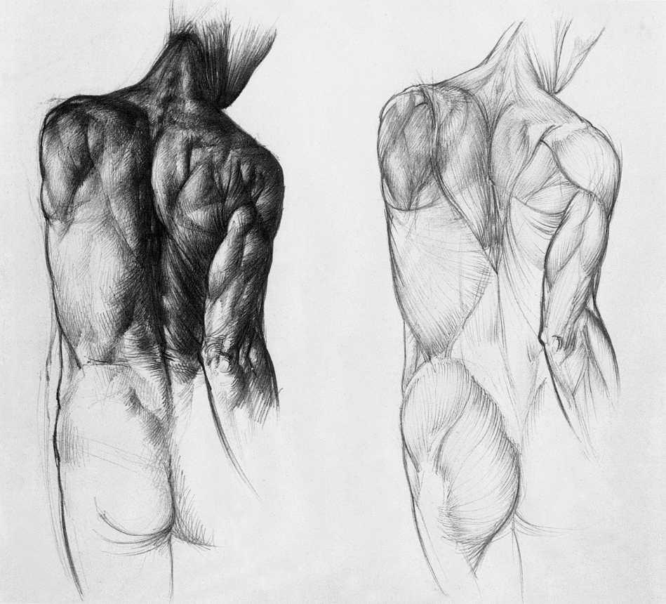 Anatomy For The Artist Jeno Barcsay Pdf Writer - pastequipment